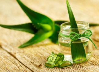 5 roślin doniczkowych, które pomogą Ci zwalczyć bezsenność